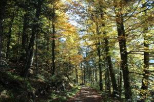 Forêt promenade